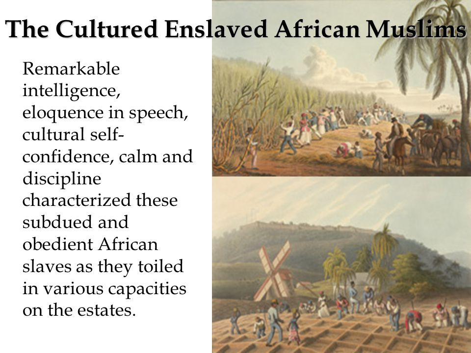 Remarkable intelligence, eloquence in speech, cultural self- confidence, calm and discipline characterized these subdued and obedient African slaves as they toiled in various capacities on the estates.