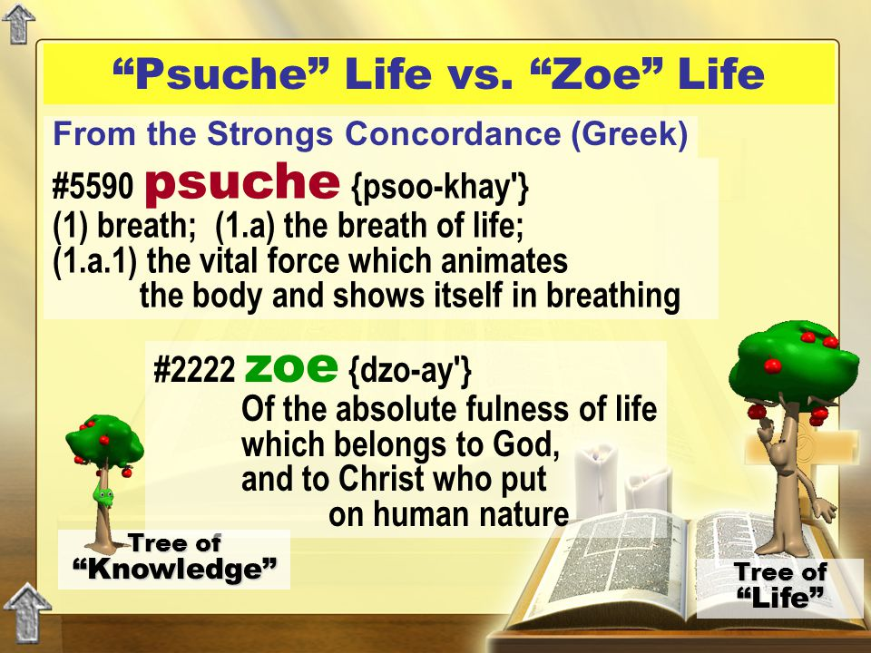 """""""Psuche"""" Life vs. """"Zoe"""" Life Tree of """"Knowledge"""" Tree of """"Life"""" #5590 psuche {psoo-khay'} (1) breath; (1.a) the breath of life; (1.a.1) the vital forc"""