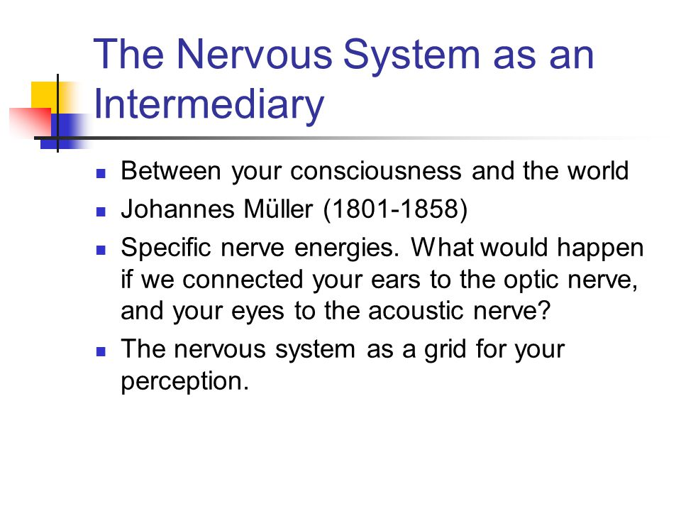 The Nervous System as an Intermediary Between your consciousness and the world Johannes Müller (1801-1858) Specific nerve energies.