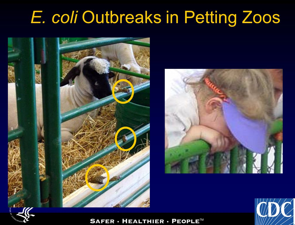 E. coli Outbreaks in Petting Zoos