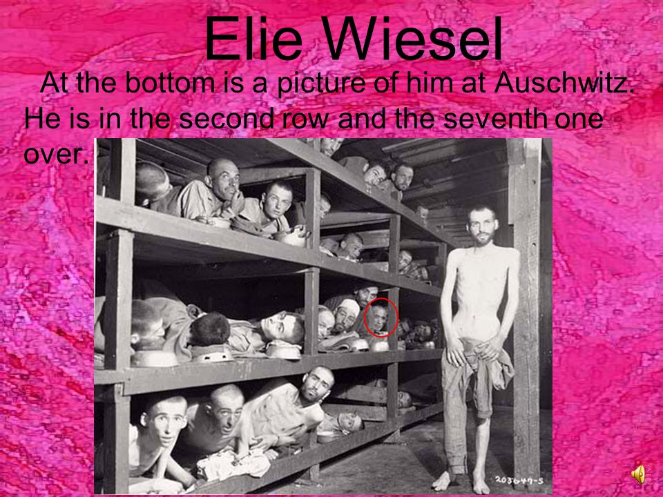 Elie Wiesel Survived:  Death march  Beatings  Starvation Survived:  Death march  Beatings  Starvation Identification Number A7713 Identification