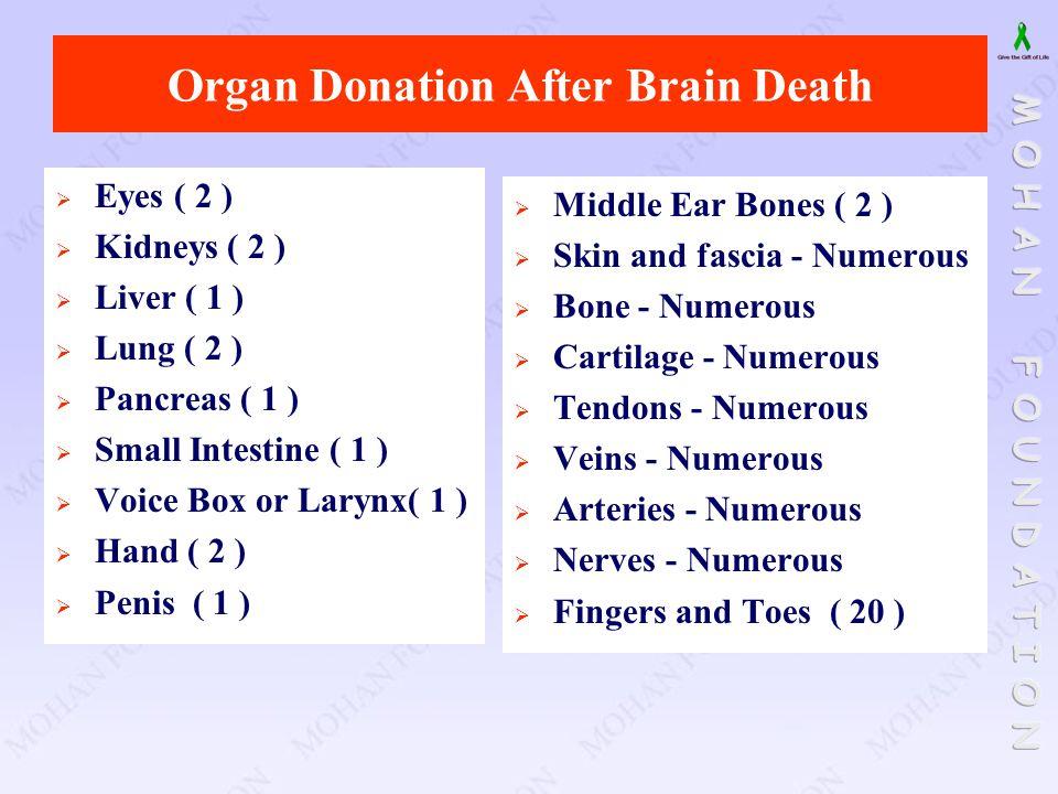 Organ Donation After Brain Death  Eyes ( 2 )  Kidneys ( 2 )  Liver ( 1 )  Lung ( 2 )  Pancreas ( 1 )  Small Intestine ( 1 )  Voice Box or Laryn