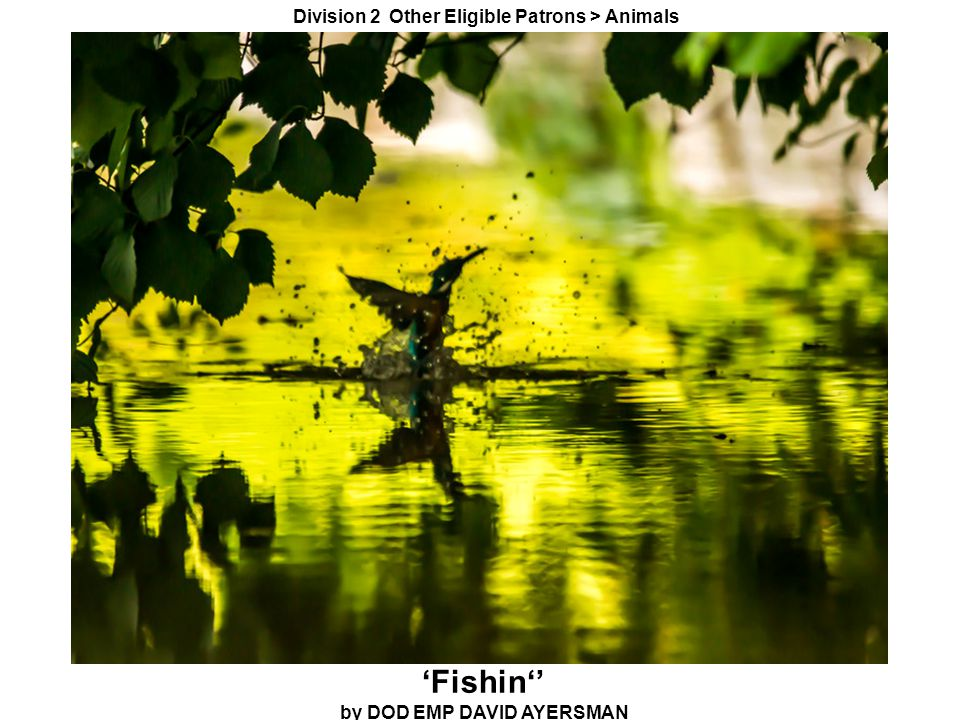 'Fishin'' by DOD EMP DAVID AYERSMAN Division 2 Other Eligible Patrons > Animals