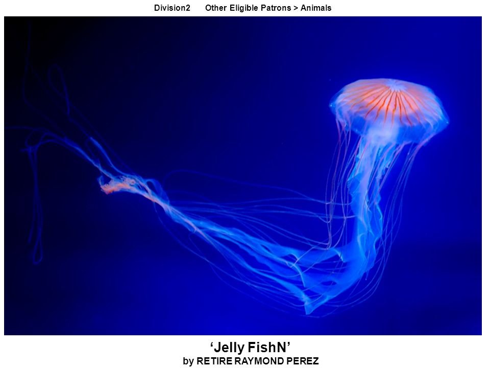 'Jelly FishN' by RETIRE RAYMOND PEREZ Division2 Other Eligible Patrons > Animals