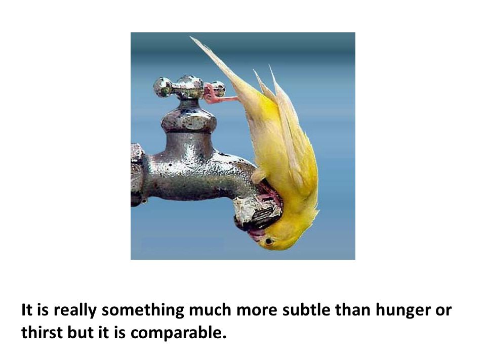 It is really something much more subtle than hunger or thirst but it is comparable.
