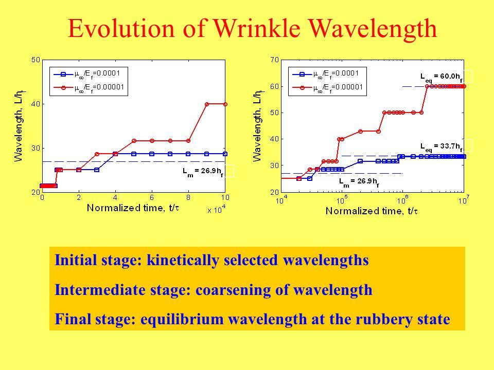 Evolution of Wrinkle Wavelength Initial stage: kinetically selected wavelengths Intermediate stage: coarsening of wavelength Final stage: equilibrium