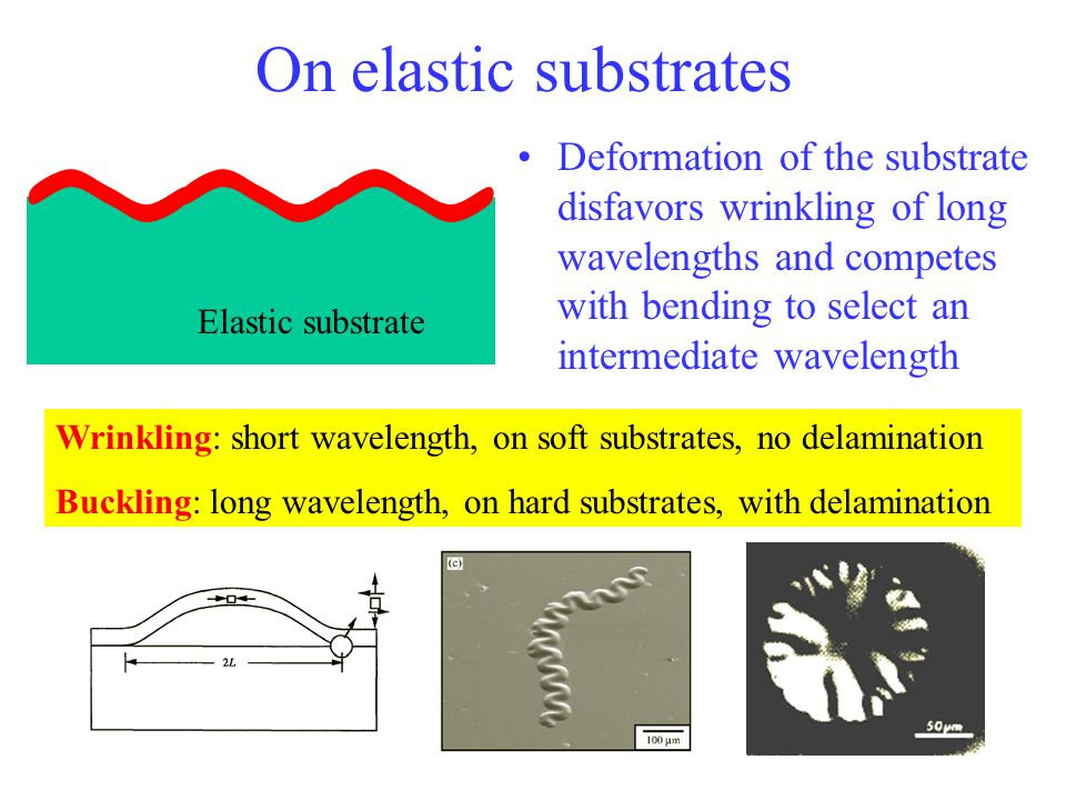 On elastic substrates Deformation of the substrate disfavors wrinkling of long wavelengths and competes with bending to select an intermediate wavelen