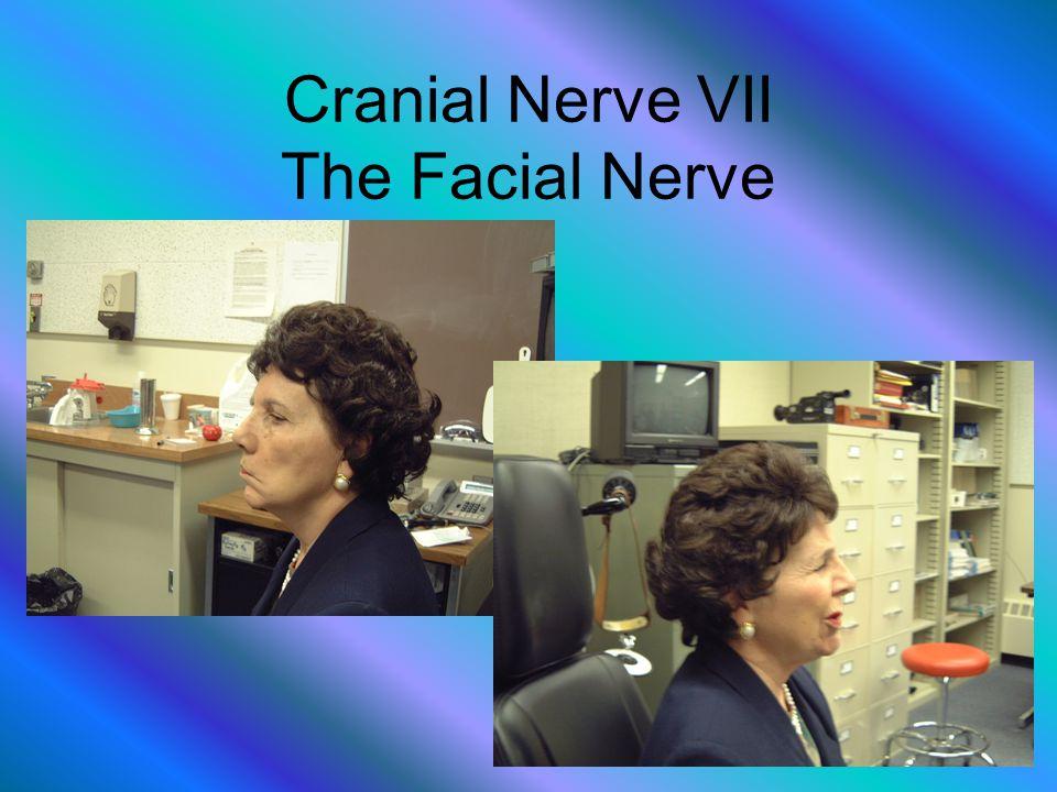 Cranial Nerve VII The Facial Nerve