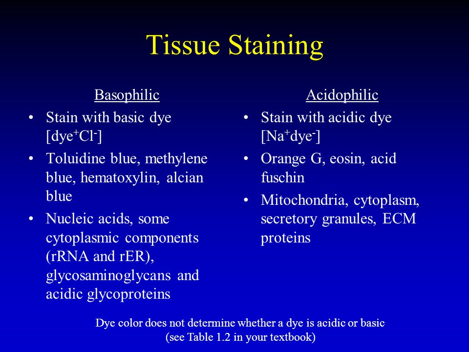 Tissue Staining Basophilic Stain with basic dye [dye + Cl - ] Toluidine blue, methylene blue, hematoxylin, alcian blue Nucleic acids, some cytoplasmic
