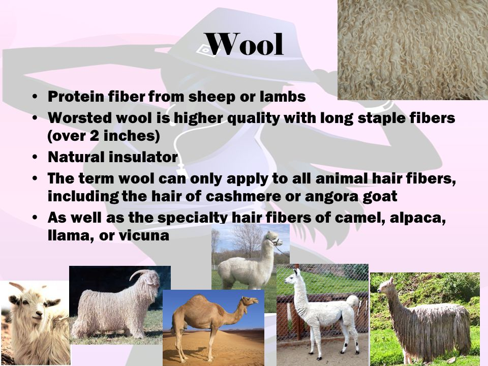 Wool Protein fiber from sheep or lambs Worsted wool is higher quality with long staple fibers (over 2 inches) Natural insulator The term wool can only