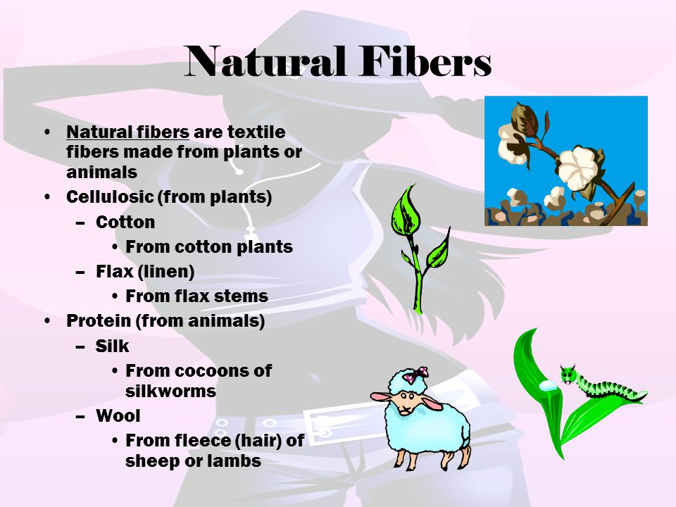 Natural Fibers Natural fibers are textile fibers made from plants or animals Cellulosic (from plants) –Cotton From cotton plants –Flax (linen) From fl