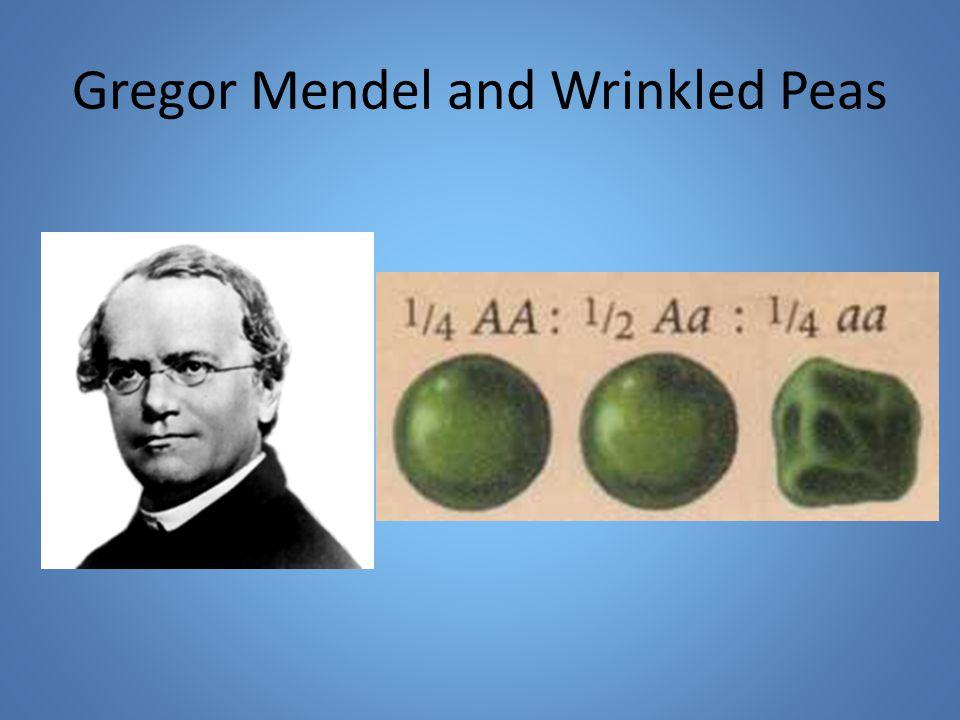 Gregor Mendel and Wrinkled Peas