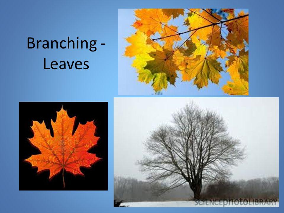 Branching - Leaves