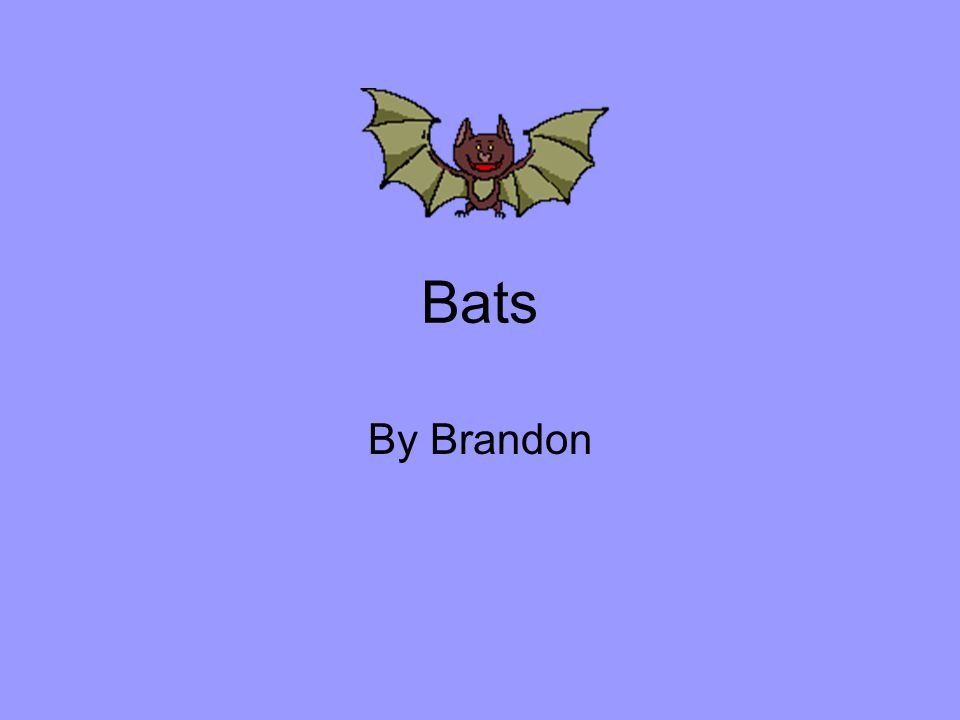 What is the name of your bat? My bat is the Vampire bat.