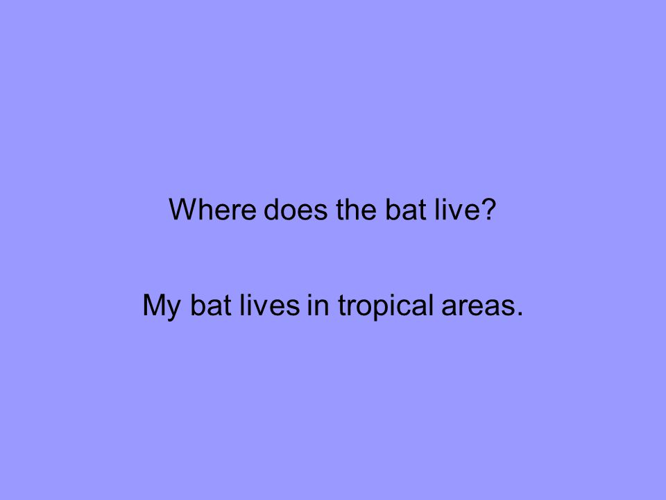 What interesting fact have you learned about your bat? Vampire bats lay 1 tow 2 egg