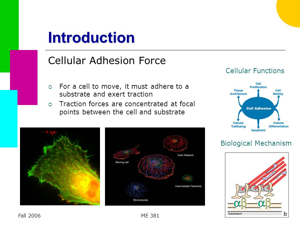 Fall 2006ME 3813 Cellular Adhesion Video