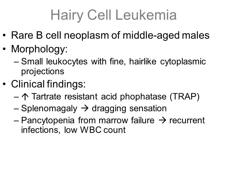 Hairy Cell Leukemia Rare B cell neoplasm of middle-aged males Morphology: –Small leukocytes with fine, hairlike cytoplasmic projections Clinical findi