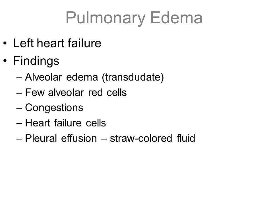 Pulmonary Edema Left heart failure Findings –Alveolar edema (transdudate) –Few alveolar red cells –Congestions –Heart failure cells –Pleural effusion