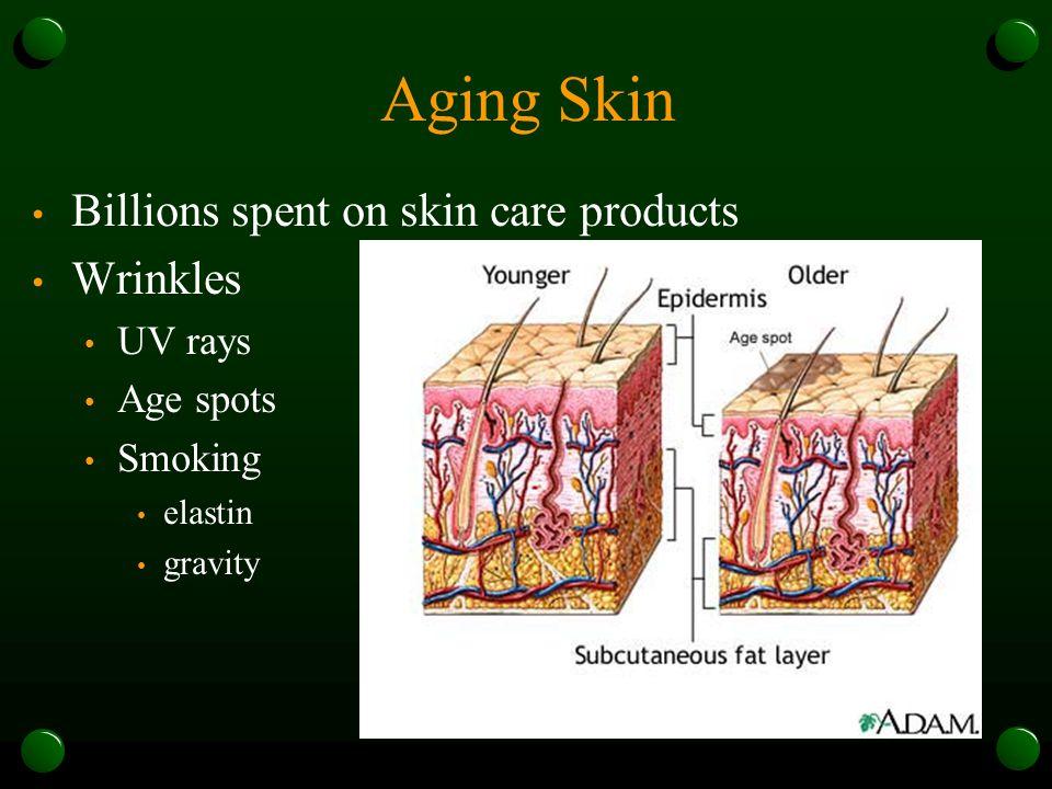 Aging Skin Billions spent on skin care products Wrinkles UV rays Age spots Smoking elastin gravity