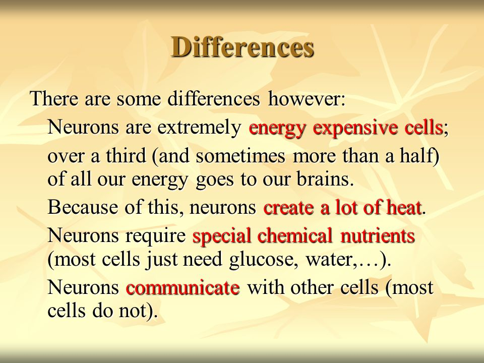 Differences There are some differences however: Neurons are extremely energy expensive cells; over a third (and sometimes more than a half) of all our energy goes to our brains.