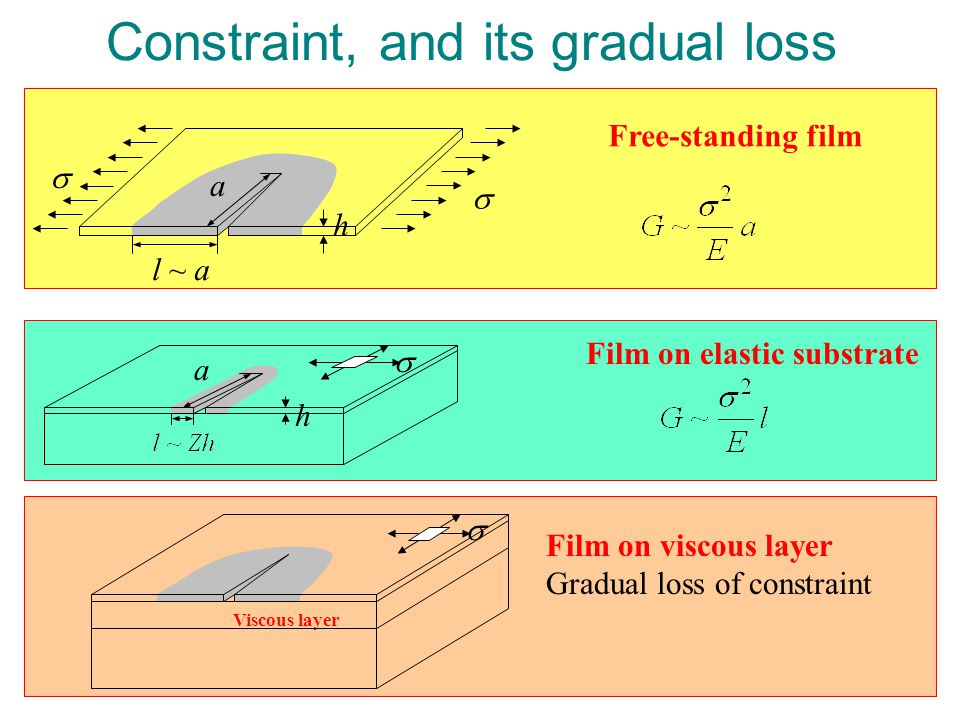 Constraint, and its gradual loss Film on elastic substrate a h  h l ~ a  a  Free-standing film Viscous layer  Film on viscous layer Gradual loss of constraint