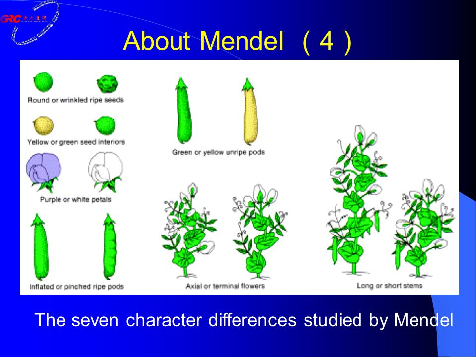 The seven character differences studied by Mendel About Mendel ( 4 )