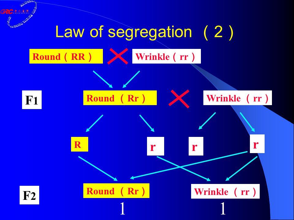 Round ( RR ) Wrinkle ( rr ) Round ( Rr ) Wrinkle ( rr ) R rr r Round ( Rr ) Wrinkle ( rr ) F1F1 F2F2 11 Law of segregation ( 2 )