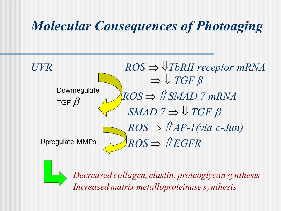 Molecular Consequences of Photoaging UVR ROS   TbRII receptor mRNA   TGF ß ROS   SMAD 7 mRNA SMAD 7   TGF  ROS   AP-1(via c-Jun) ROS   EGFR Decreased collagen, elastin, proteoglycan synthesis Increased matrix metalloproteinase synthesis Upregulate MMPs Downregulate TGF 
