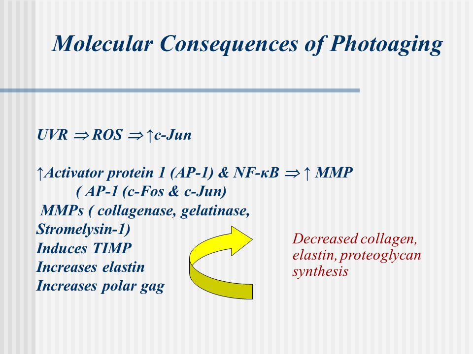 Molecular Consequences of Photoaging UVR  ROS  ↑c-Jun ↑Activator protein 1 (AP-1) & NF-κB  ↑ MMP ( AP-1 (c-Fos & c-Jun) MMPs ( collagenase, gelatinase, Stromelysin-1) Induces TIMP Increases elastin Increases polar gag Decreased collagen, elastin, proteoglycan synthesis