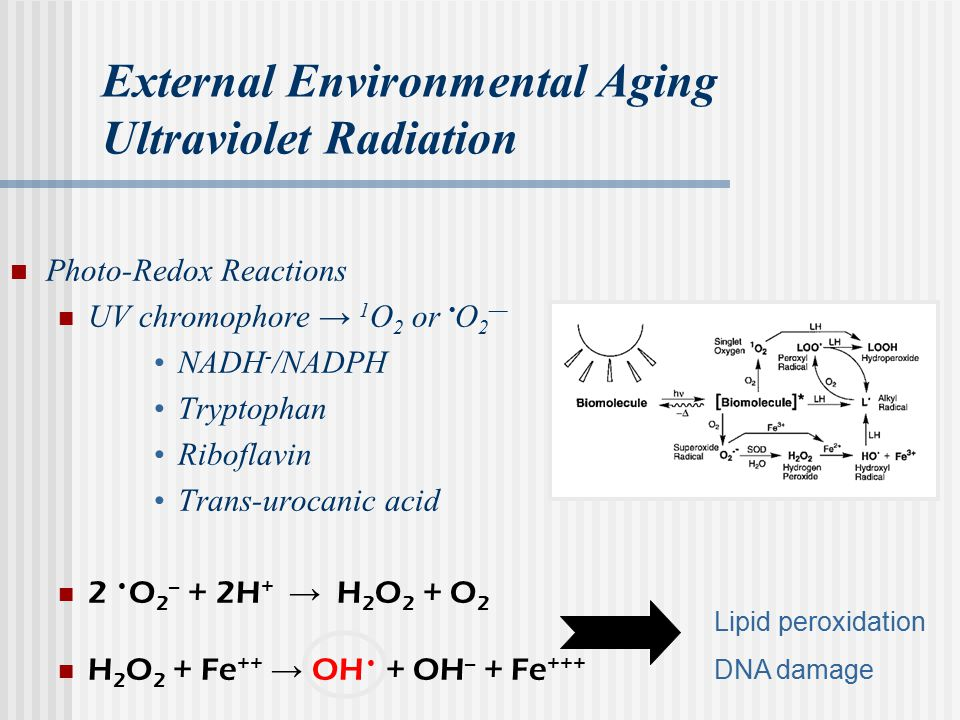 External Environmental Aging Ultraviolet Radiation Photo-Redox Reactions UV chromophore → 1 O 2 or O 2 — NADH - /NADPH Tryptophan Riboflavin Trans-urocanic acid 2 O 2 -- + 2H + → H 2 O 2 + O 2 H 2 O 2 + Fe ++ → OH + OH -- + Fe +++ Lipid peroxidation DNA damage