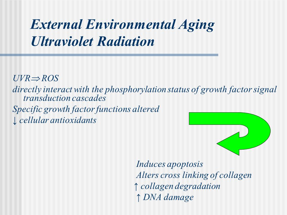 External Environmental Aging Ultraviolet Radiation UVR  ROS directly interact with the phosphorylation status of growth factor signal transduction cascades Specific growth factor functions altered ↓ cellular antioxidants Induces apoptosis Alters cross linking of collagen ↑ collagen degradation ↑ DNA damage