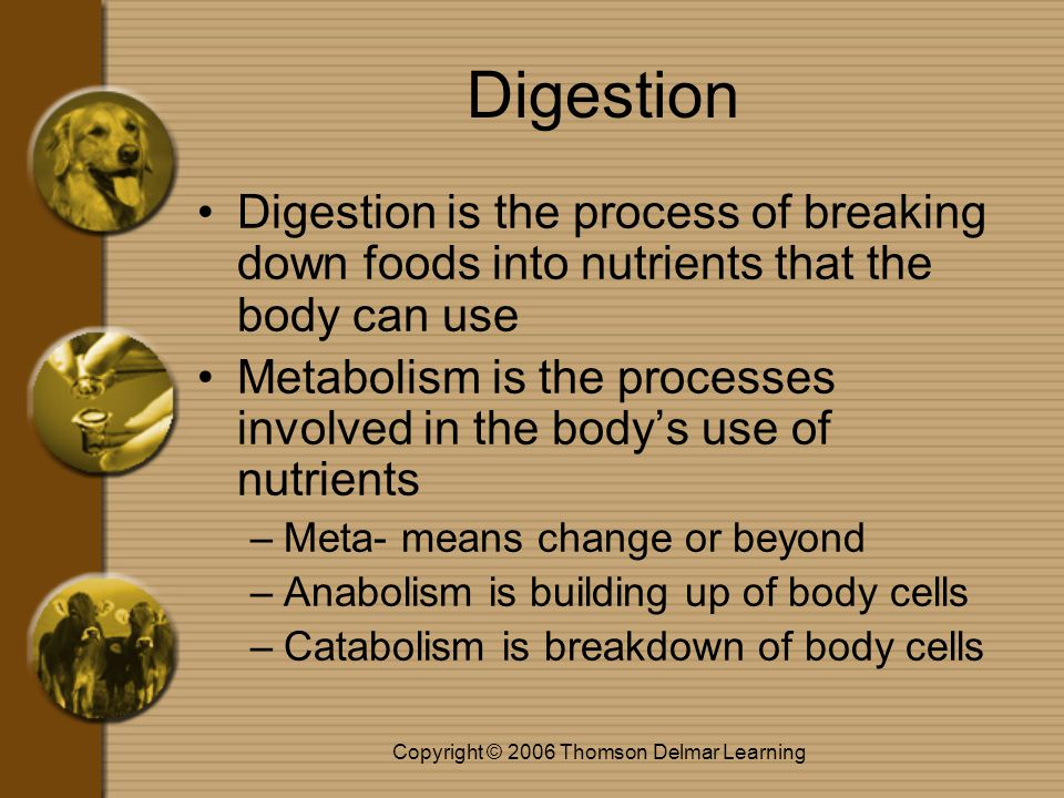 Copyright © 2006 Thomson Delmar Learning Digestion Digestion is the process of breaking down foods into nutrients that the body can use Metabolism is the processes involved in the body's use of nutrients –Meta- means change or beyond –Anabolism is building up of body cells –Catabolism is breakdown of body cells