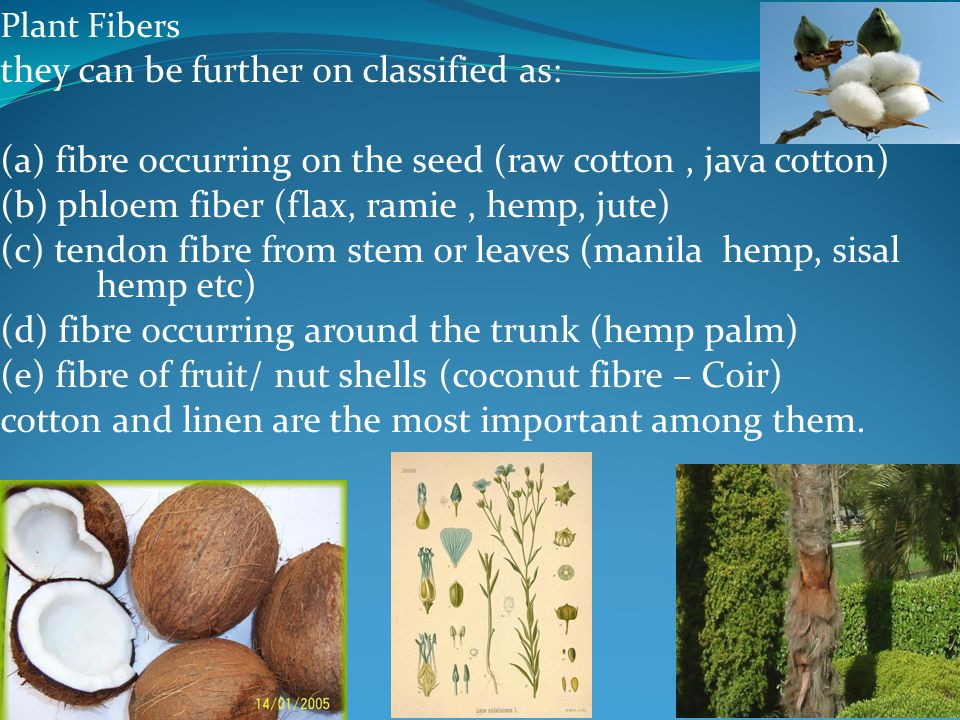 Plant Fibers they can be further on classified as: (a) fibre occurring on the seed (raw cotton, java cotton) (b) phloem fiber (flax, ramie, hemp, jute
