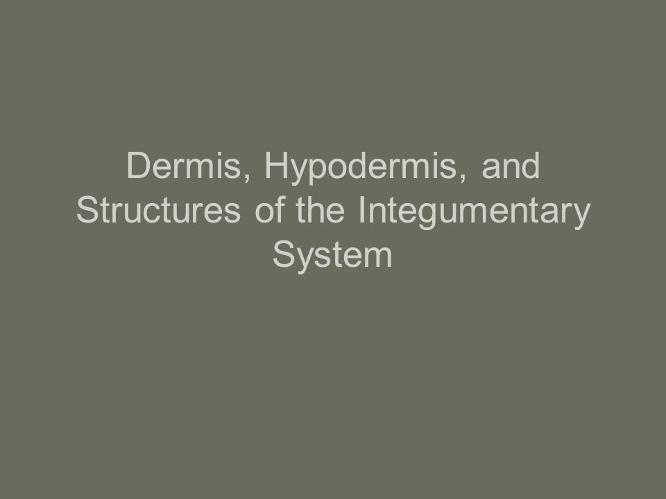 Objectives You will be able to describe the histological structure of the epidermis, dermis, and subcutaneous tissue You will be able to describe the function of each of the individual parts in the epidermis, dermis, hypodermis