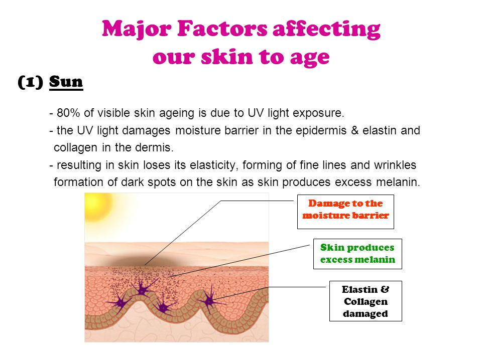 Major Factors affecting our skin to age (1)Sun - 80% of visible skin ageing is due to UV light exposure.