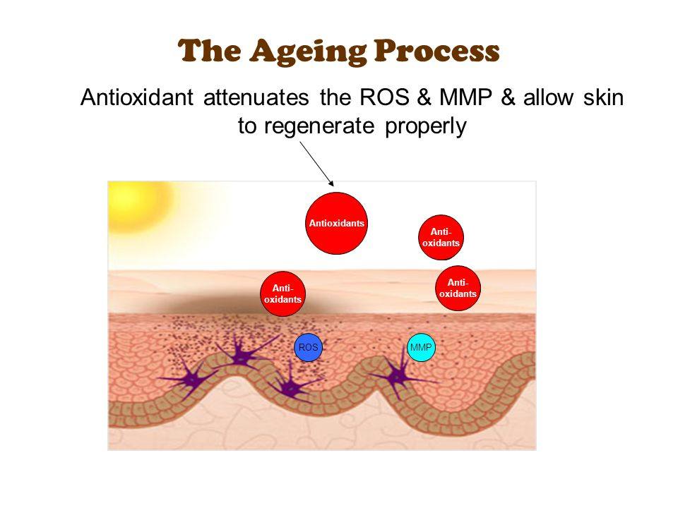 The Ageing Process ROS MMP Antioxidant attenuates the ROS & MMP & allow skin to regenerate properly Antioxidants Anti- oxidants Anti- oxidants Anti- o