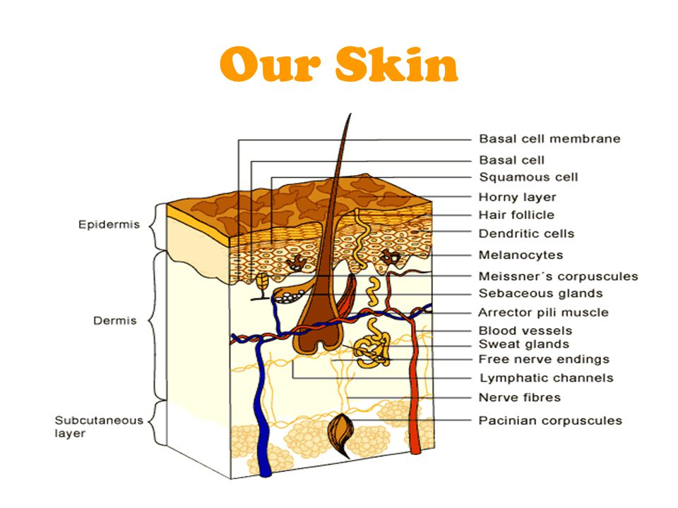 Our Skin
