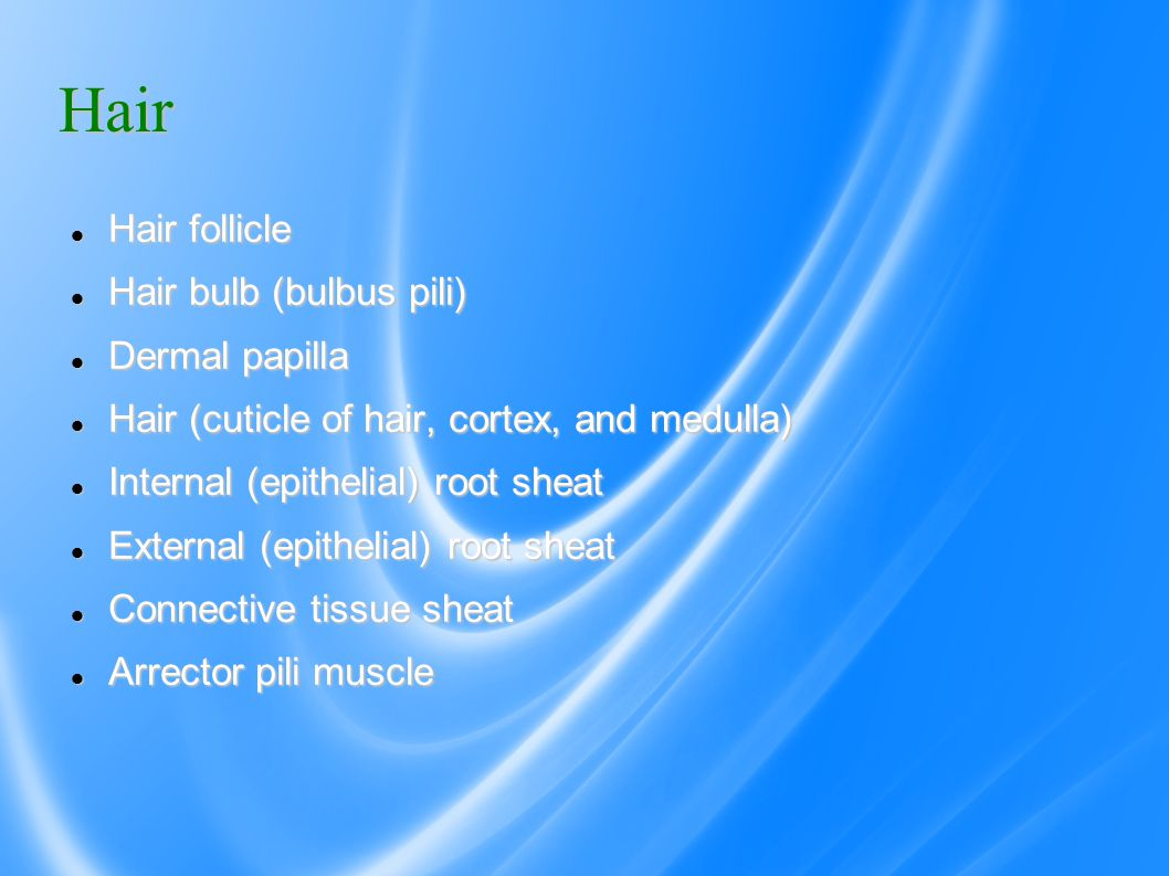Hair Hair follicle Hair follicle Hair bulb (bulbus pili) Hair bulb (bulbus pili) Dermal papilla Dermal papilla Hair (cuticle of hair, cortex, and medulla) Hair (cuticle of hair, cortex, and medulla) Internal (epithelial) root sheat Internal (epithelial) root sheat External (epithelial) root sheat External (epithelial) root sheat Connective tissue sheat Connective tissue sheat Arrector pili muscle Arrector pili muscle