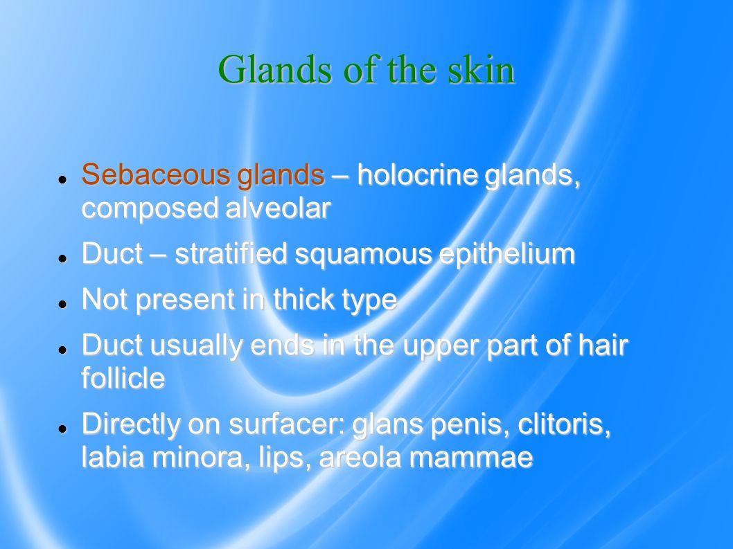 Glands of the skin Sebaceous glands – holocrine glands, composed alveolar Sebaceous glands – holocrine glands, composed alveolar Duct – stratified squ