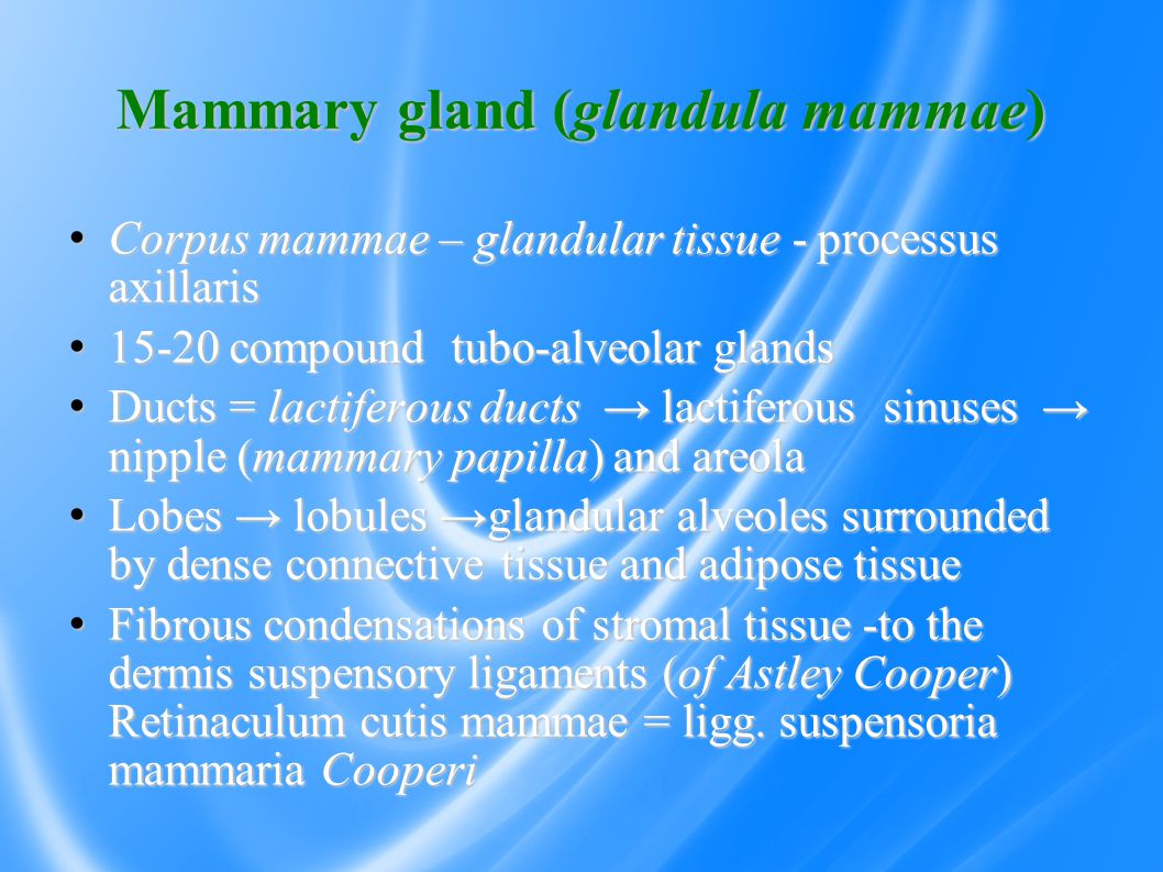 Mammary gland (glandula mammae) Corpus mammae – glandular tissue - processus axillaris Corpus mammae – glandular tissue - processus axillaris 15-20 compound tubo-alveolar glands 15-20 compound tubo-alveolar glands Ducts = lactiferous ducts → lactiferous sinuses → nipple (mammary papilla) and areola Ducts = lactiferous ducts → lactiferous sinuses → nipple (mammary papilla) and areola Lobes → lobules →glandular alveoles surrounded by dense connective tissue and adipose tissue  Lobes → lobules →glandular alveoles surrounded by dense connective tissue and adipose tissue  Fibrous condensations of stromal tissue -to the dermis suspensory ligaments (of Astley Cooper) Retinaculum cutis mammae = ligg.