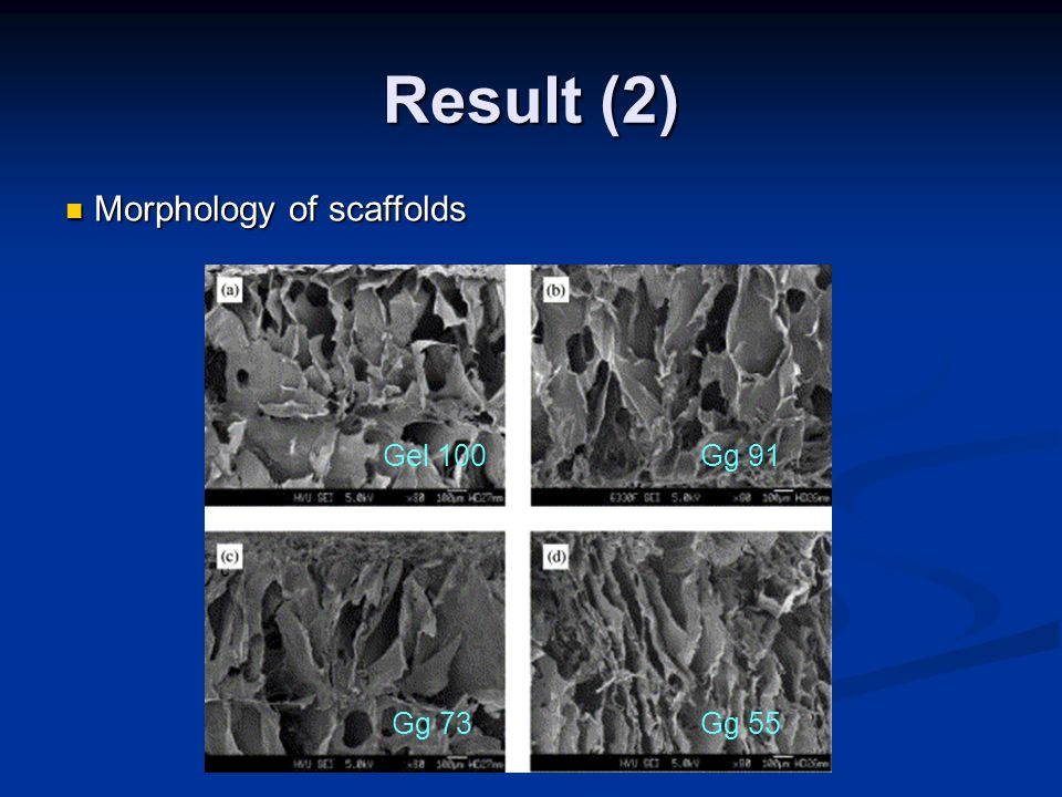 Result (2) Morphology of scaffolds Morphology of scaffolds Gel 100Gg 91 Gg 73Gg 55