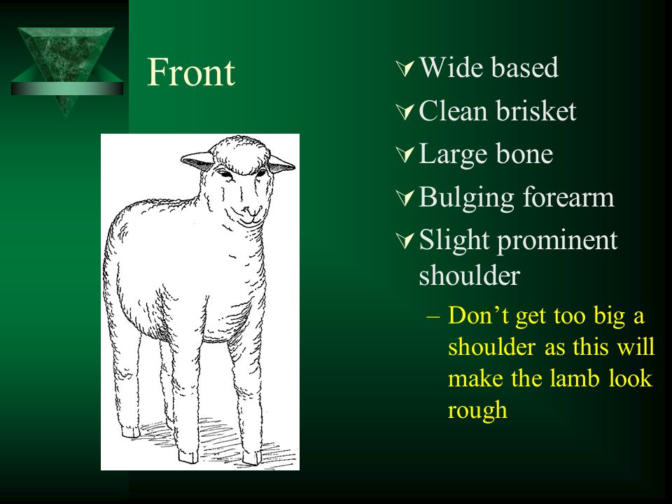 Feeling the top  Put fingers together and feel across spine  Check the width of loin  Check the length of loin