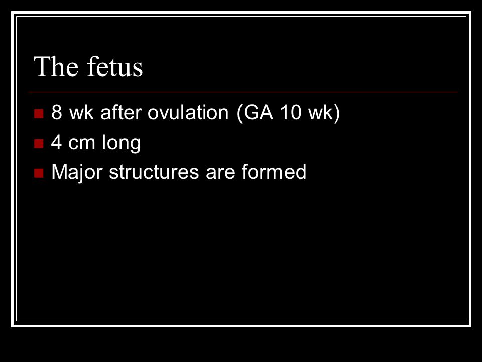 The fetus 8 wk after ovulation (GA 10 wk) 4 cm long Major structures are formed