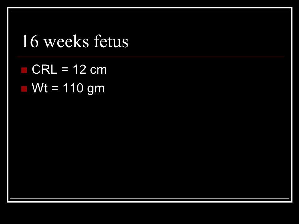 16 weeks fetus CRL = 12 cm Wt = 110 gm