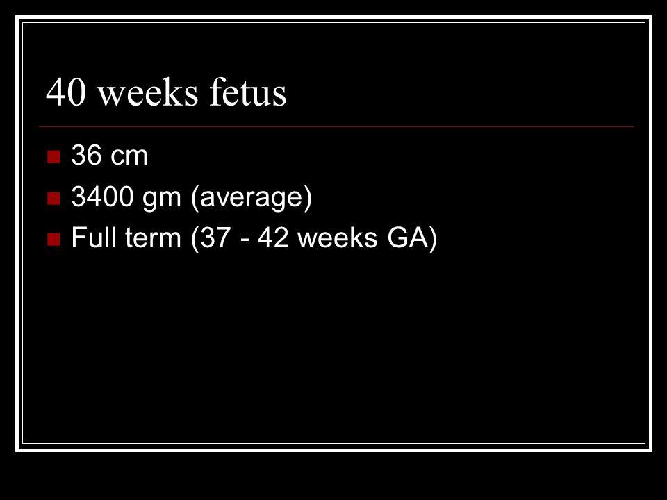 40 weeks fetus 36 cm 3400 gm (average) Full term (37 - 42 weeks GA)