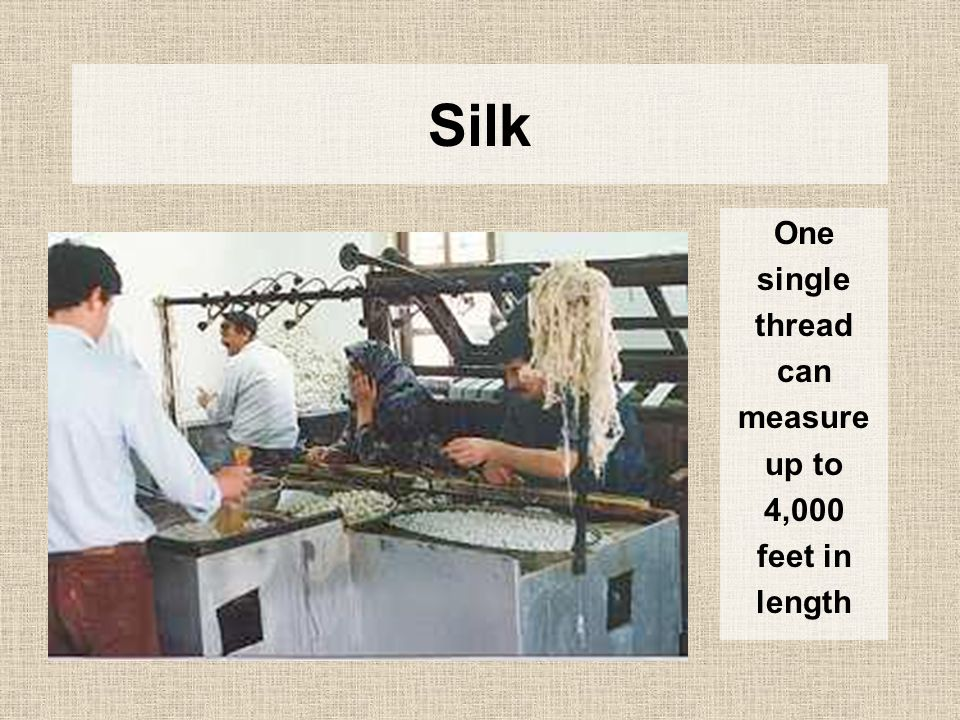 Silk One single thread can measure up to 4,000 feet in length