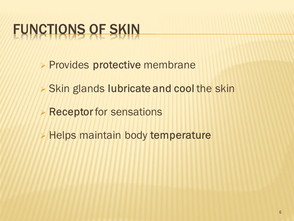 6  Provides protective membrane  Skin glands lubricate and cool the skin  Receptor for sensations  Helps maintain body temperature