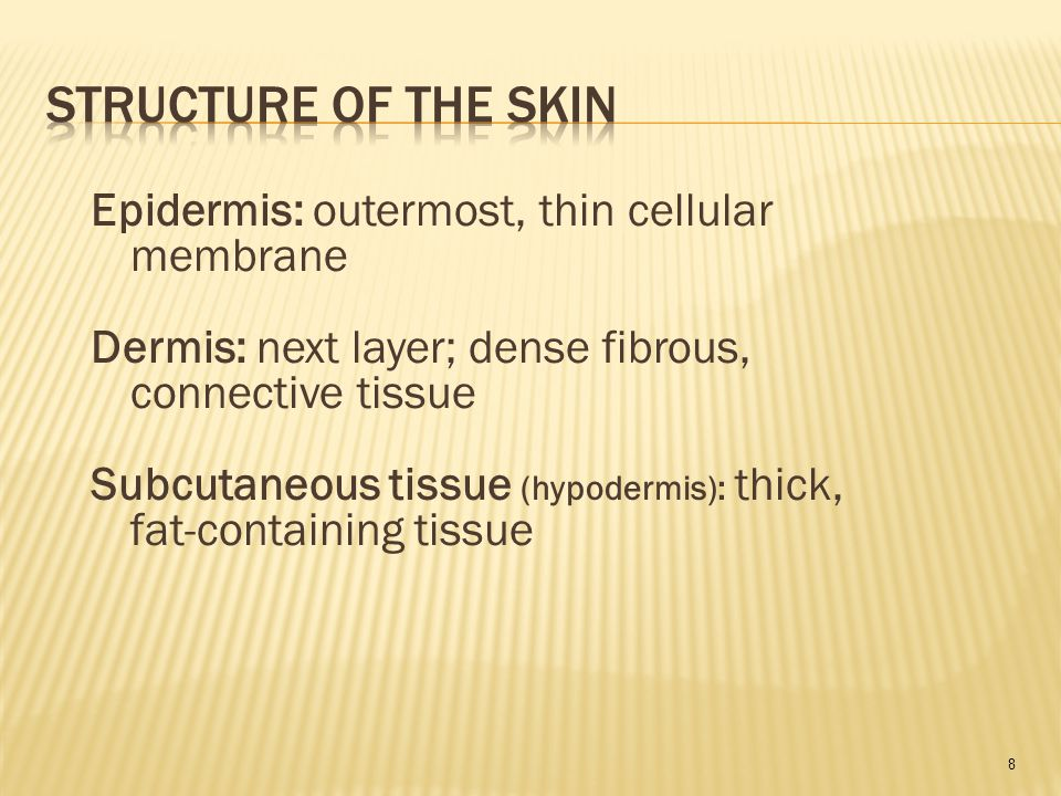 8 Epidermis: outermost, thin cellular membrane Dermis: next layer; dense fibrous, connective tissue Subcutaneous tissue (hypodermis): thick, fat-containing tissue
