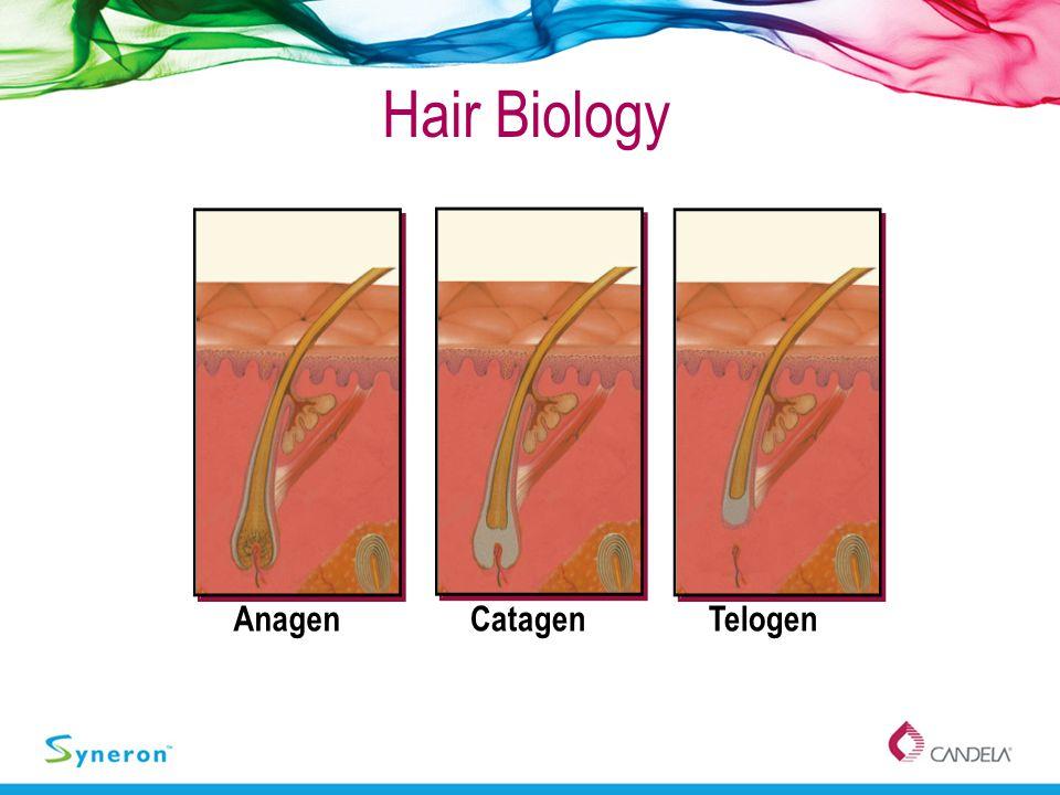 Hair Biology AnagenTelogenCatagen