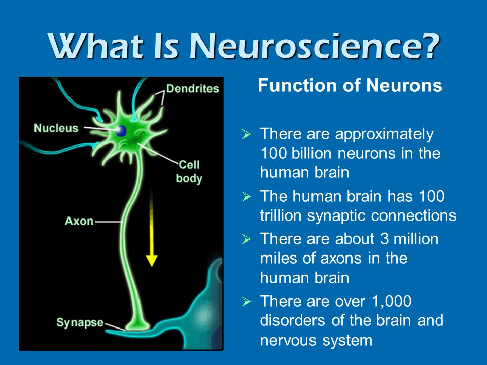What Is Neuroscience Neuroanatomy: Structure is Key to Function